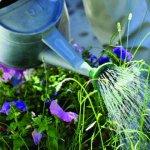 gardening 2