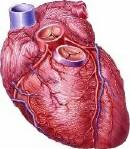 heart_d2